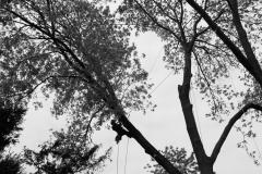 boomverzorger in de lijnen
